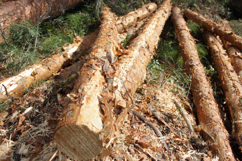 Puun Hintakehitys